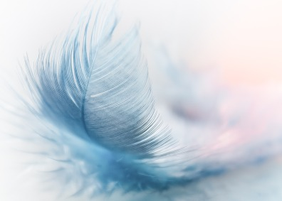 A Feathered Heart